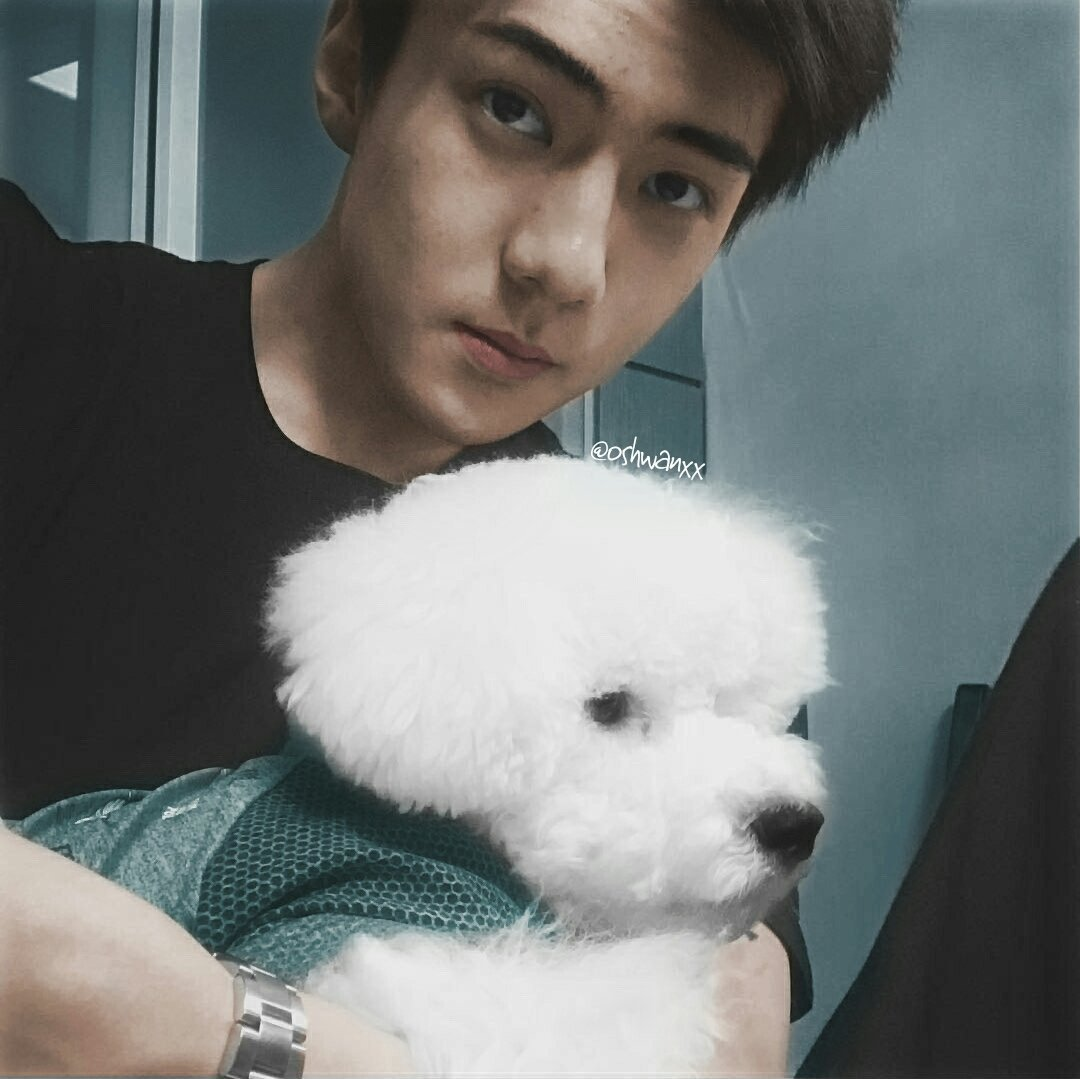 They Make A Chilling Discovery After Taking This Family Photo: EXO Has 10 Furry Little Friends…This Is Who They Are