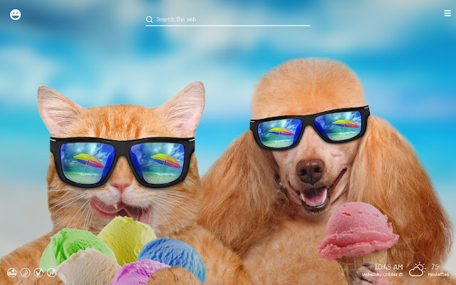 Funny Cats Dogs Hilarious Pets Wallpapers