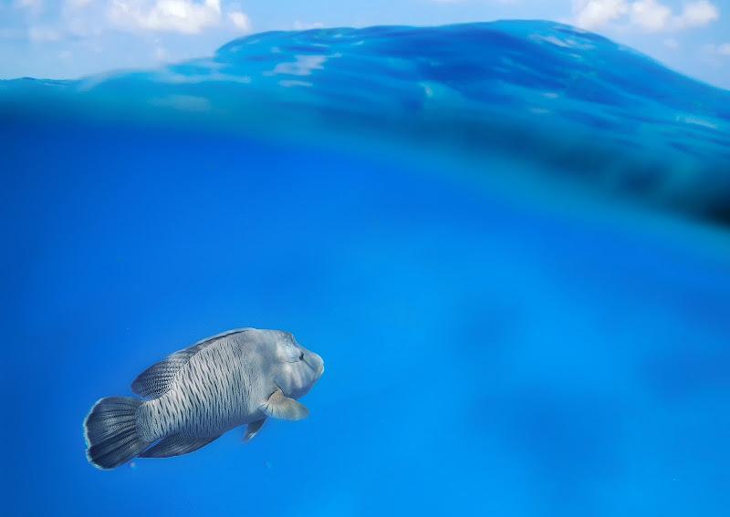 Una culla di azzurro con merletti di cielo di tonino_de_rubeis