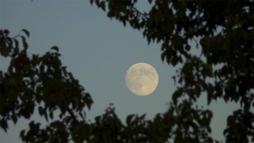 Moon-Up 1.jpg