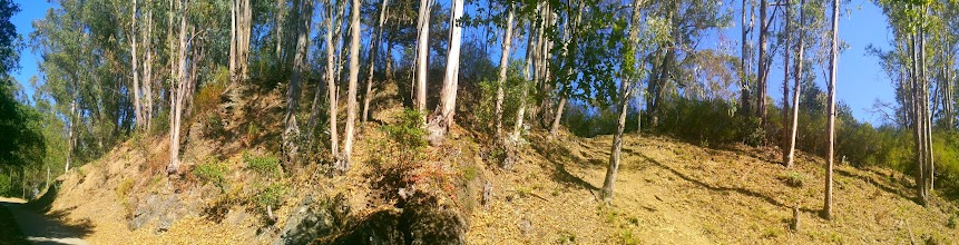 Photo: Panorama of the eucalyptus side of the trail.