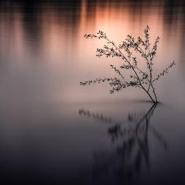 by Alex Jitaru - Nature Up Close Trees & Bushes