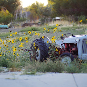 Tractor by Seth Parkinson - Transportation Other ( tractor sunflower sunflowers sunset dof,  )