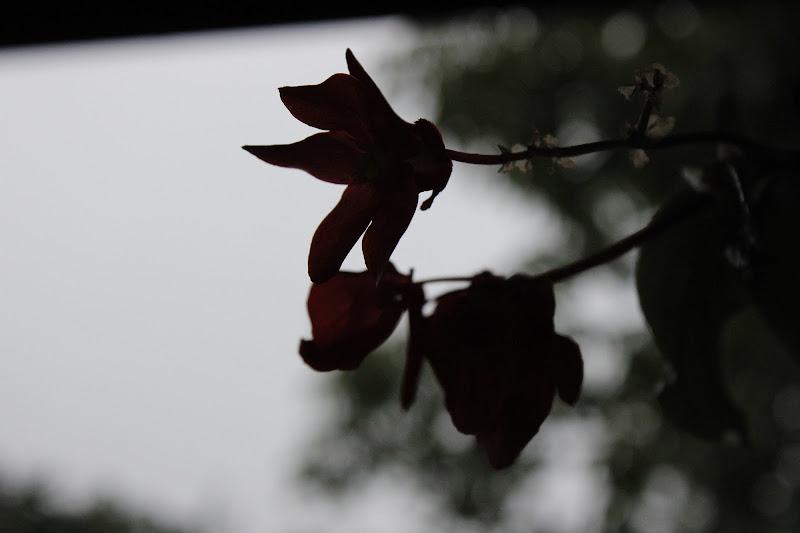 Flower di Ange