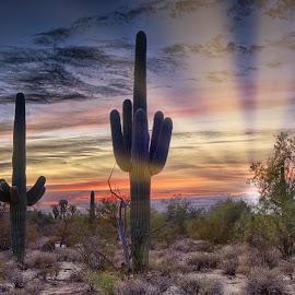 Big Saguaro by Charlie Alolkoy - Landscapes Deserts ( desert, sunset, arizona, tucson, sunrise, cactus )