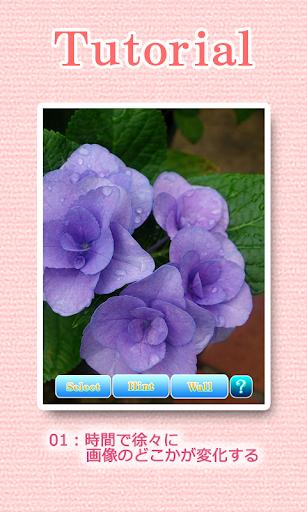 Landscapes of the flower 1.1 Windows u7528 2