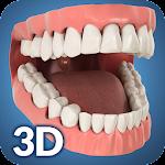 Dental Anatomy Pro. icon