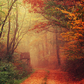 A Song for October by Zsolt Zsigmond - Landscapes Forests ( footpath, gold colored, orange color, red, tree, scenics, forest, beauty in nature, leaf, yellow, landscape, multi colored )