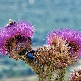 Bugs house by Nelida Dot - Nature Up Close Other plants ( bugs, nature, thistle, purple, flower )