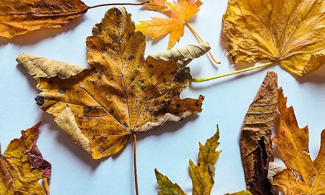 L'autunno  di Marilena Valra