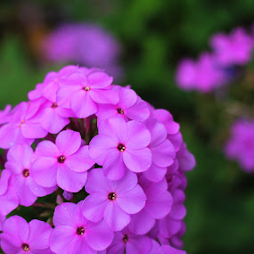 Beauty by Stephanie Munguia-Wharry - Novices Only Flowers & Plants ( flower )