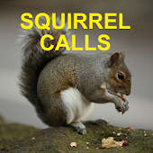 Squirrel Calls for Hunting UK