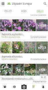 PlantNet určování rostlin - náhled