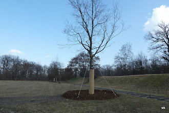 Photo: dornhaldenfriedhof / vermutlich schlossgarten ahorn?