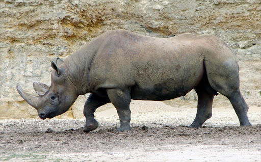 Black rhino. File photo.