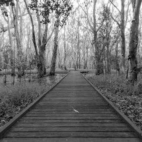 by Steve Hunt - Black & White Landscapes