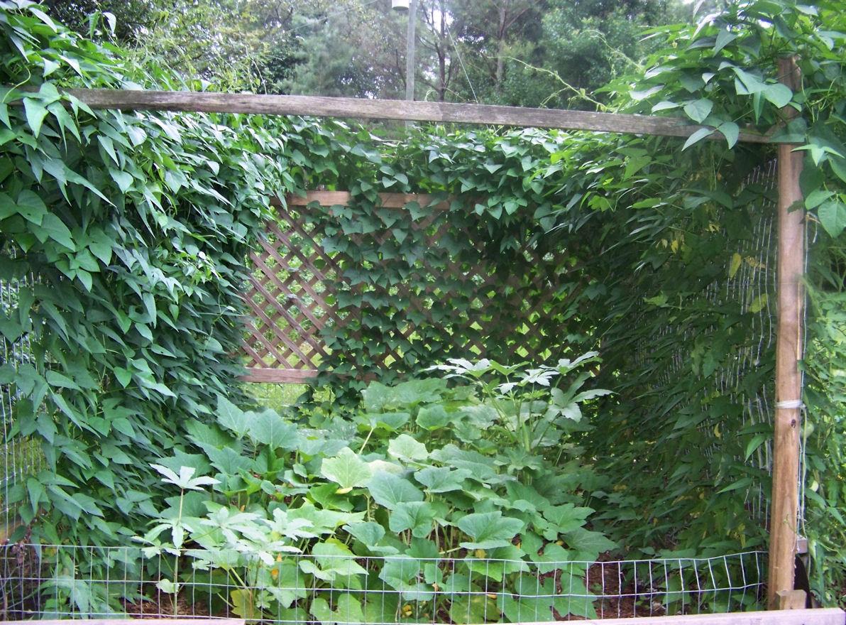 Photo: My Top Ground Garden