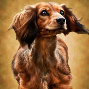 Quincy by Irene Orloff - Animals - Dogs Portraits