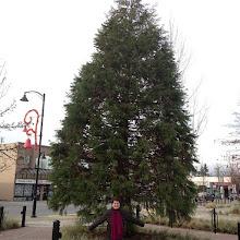 Photo: Christmas Tree in Maple Ridge Memorial Peace Park #intercer #tree #trees #bell #branch #leaf #leaves #christmas #lights #park #city #winter #urban #design #town #britishcolumbia #canada #beautiful #mapleridge #pittmeadows #green - via Instagram, http://instagr.am/p/THE4jupfph/