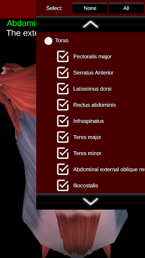 Muscular System 3D (anatomy) 2.0.8 screenshots 5