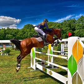 Lady's Jump by Marco Bertamé - Sports & Fitness Other Sports ( clouds, jumping, green, 2016, horse, yellow, roeser, luxembourg, jump, sky, blue, woman, réiser päerdsdeeg, equestrian event, lady, csi jumping, brown, obstable )