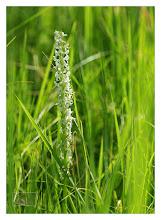 Photo: Eastern Sierras-20120716-380