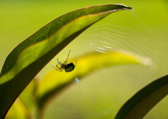 Nel regno del ragno di atlantex