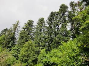 Photo: superbes fûtaies de la Forêt Royale des Fanges