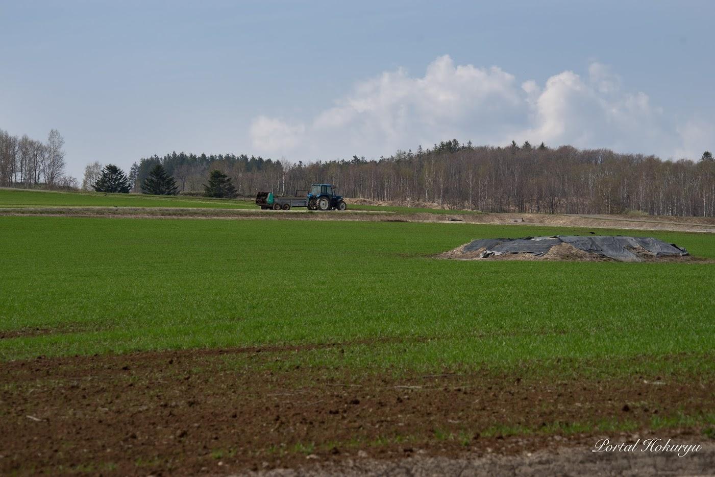 堆肥が撒かれています