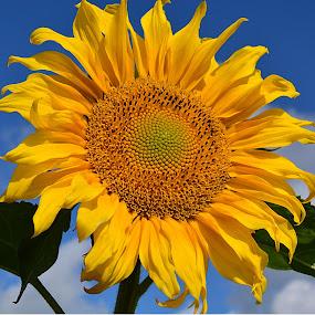 by Eugenija Seinauskiene - Flowers Flower Gardens (  )