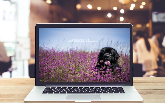 Newfoundland HD Wallpapers Dog Theme
