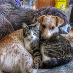 Best Friends by Johnny Knight - Novices Only Pets ( canine, cat, animals, friends, family, pet, feline, dog, portrait )