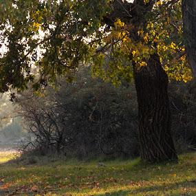 Autumn by Otetea Ovidiu - Landscapes Forests (  )