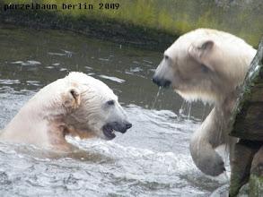 Photo: ... und Toben im Wasser :-)
