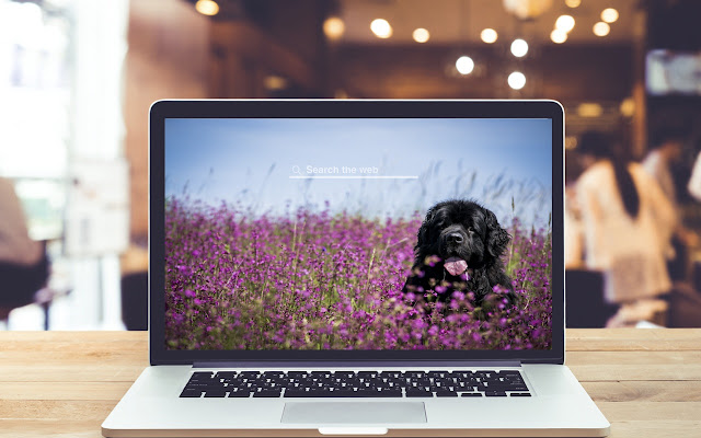 Newfoundland HD Wallpapers Dog Theme