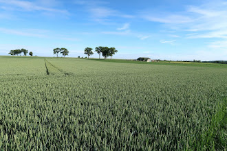 Photo: Plateau de Warsage
