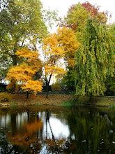Photo: kolory  jesieni