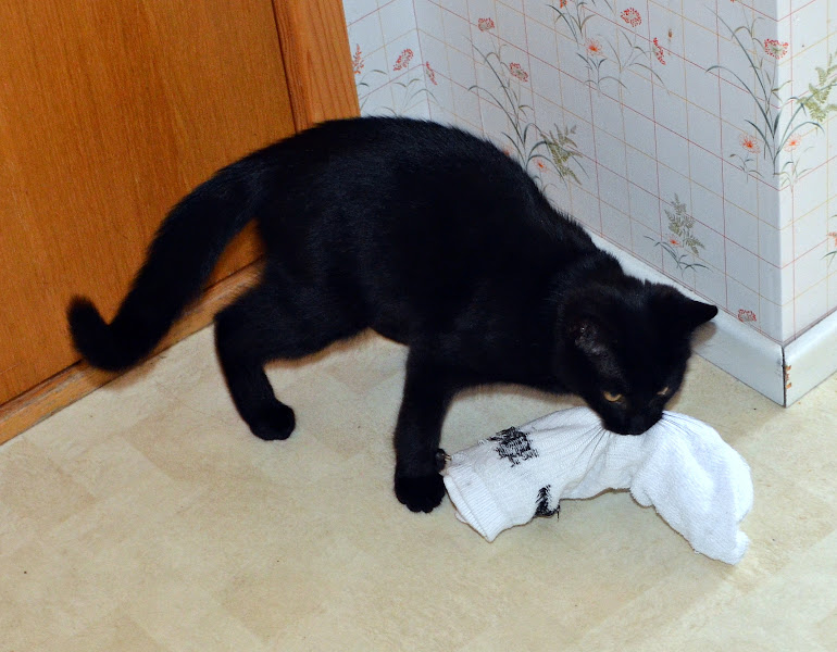 Photo: Why Socks Go Missing