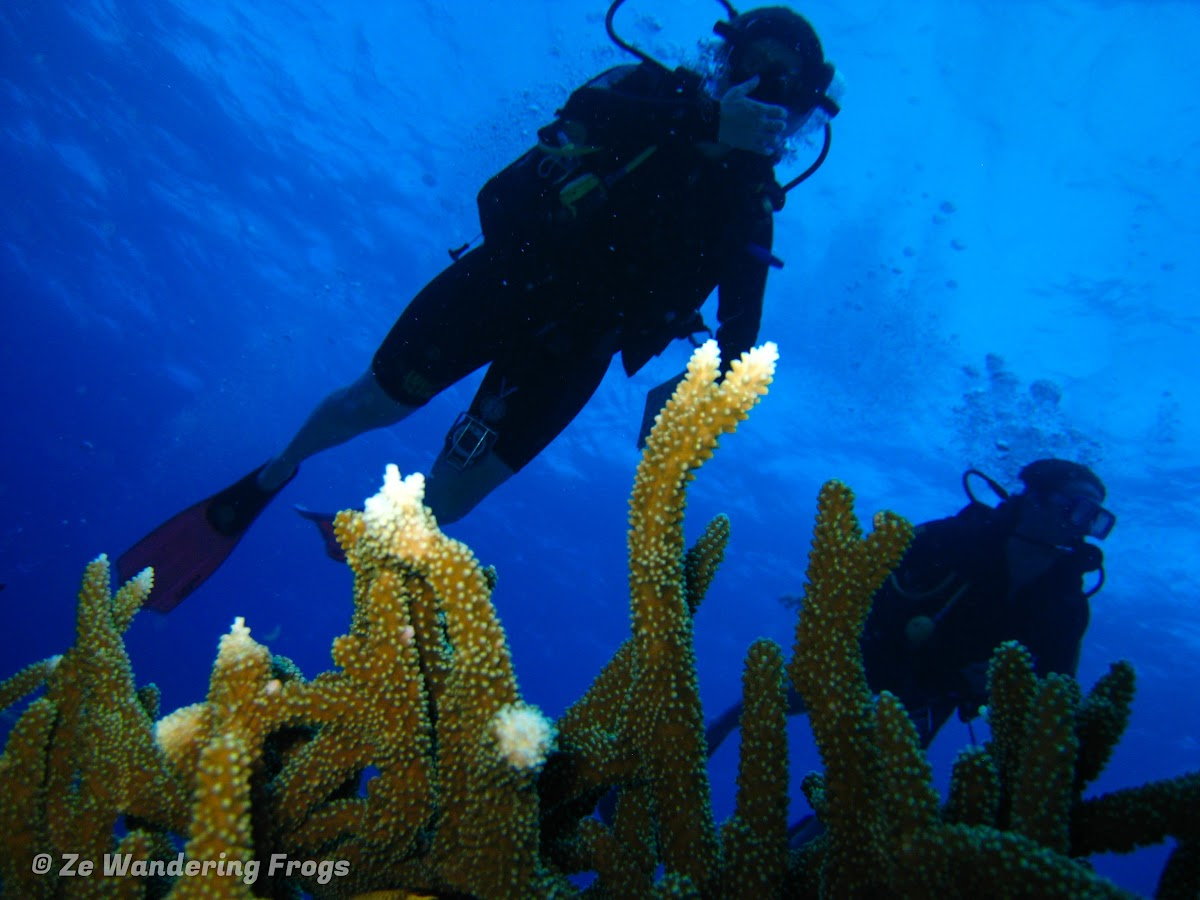 A Top Great Barrier Reef Liveaboard Taka Dive Boat Experience Ze