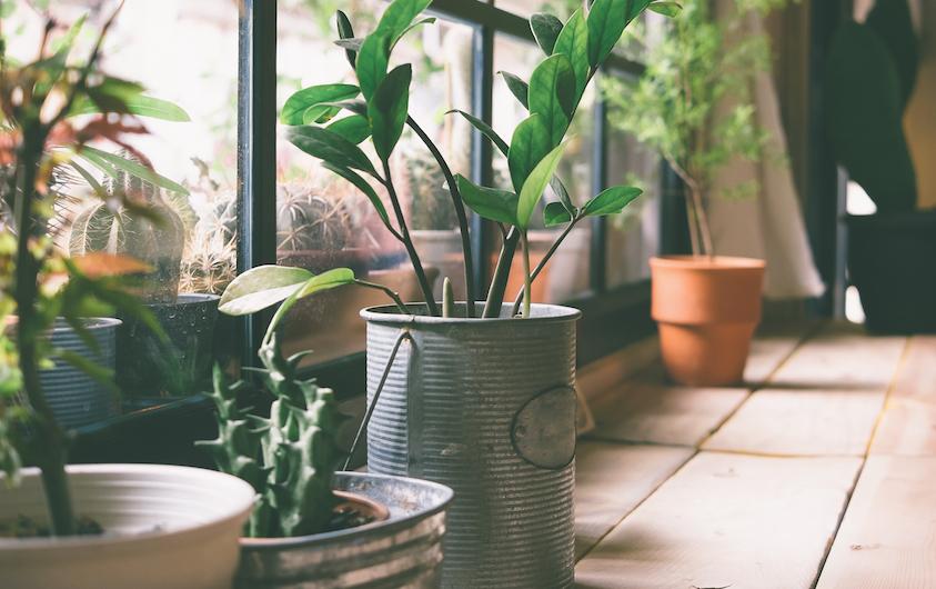 5 Household Plants For A Purified House