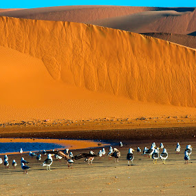 Lagoon Of the Namib Desert by Bushbabies Inki - Landscapes Beaches