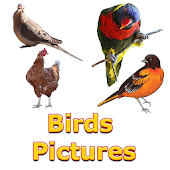 Birds Names with Pictures for Kids