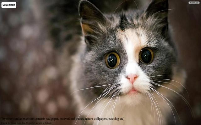 Cute Cat New Tab