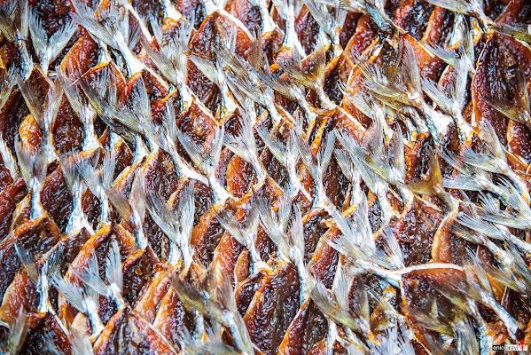 Quadretto di pesci di enmaster