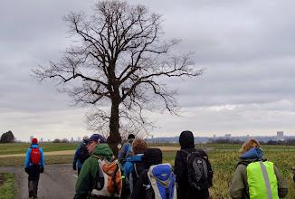 Photo: De Witse-boom, het Brussels Justitiepaleis aan de horizon.