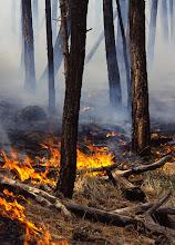 Photo: Wildfire, Blue Range Primitive Area, Arizona