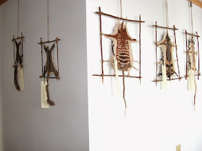 Photo: It was great to have some little Aussie Marsupials up on the walls. Photo credit: Ruth Marshall