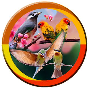 Koleksi Masteran Kicau Pemikat Burung - náhled