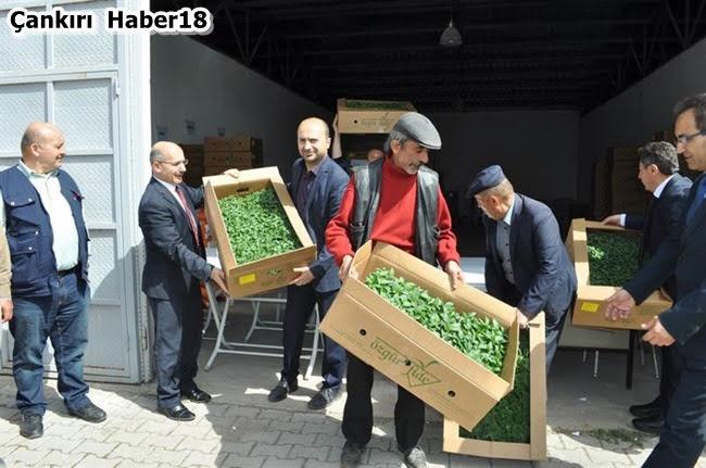 Çankırı Tarım ve Orman İl Müdürlüğü,İl Müdürü Osman Çakır,