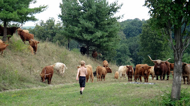Photo: Trey heads for more fenceposts while herd patiently awaits